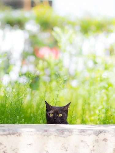 ネコ photo